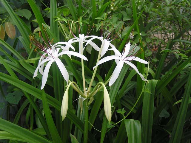 TOP 3 cây thuốc nam chữa viêm cổ tử cung có sẵn trong vườn