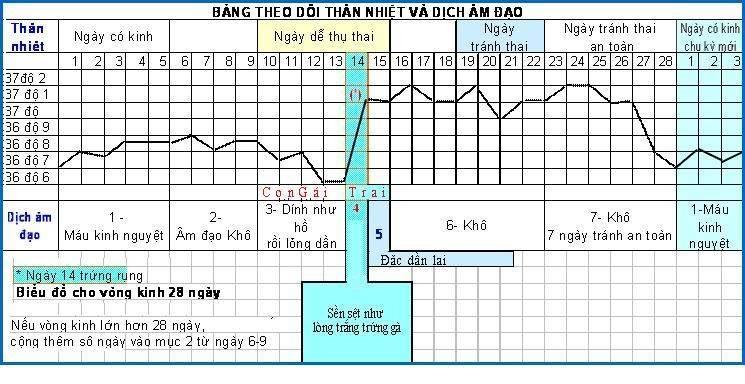 biểu đồ theo dõi thân nhiệt và dịch âm đạo